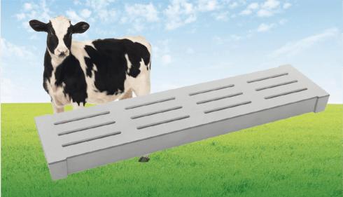 ruszta dla bydła