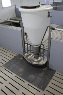 Automat Paszowy